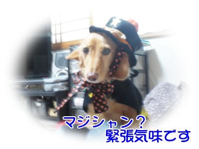 CIMG7146.jpg