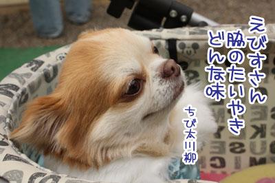 03_20100130093410.jpg
