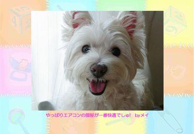 0815mei_ページ000