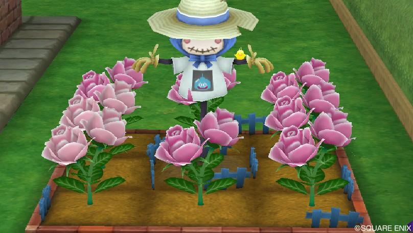 ハナの花1