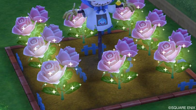 ハナの花3