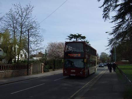 イギリスの桜3