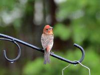 backyardbirds-01.jpg