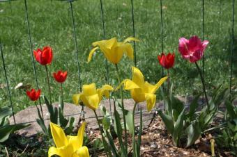 2010+spring+096_convert_20100501043443.jpg