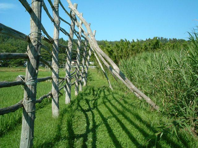 畑の入り口