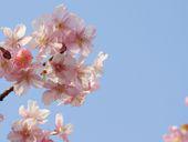 FLN77CCA5KPGYPCAKA5BUQCABS1VJ7CAJAOIXWCA2TB8G4CA1O07LFCAV1RYRLCAI7L15QCAQ1PNSACA002OEUCA6KZOG4CAMOVQ4PCAIU08FHCADJDXMQCA8MN9桜桜H9CA1MC583CAWEO41QCABG9X0XCAKSM6KJ