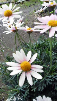 529花201105281652000