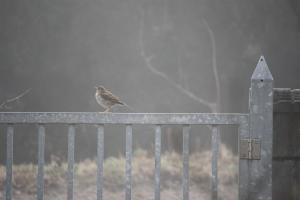 霧の朝の小鳥縮小ph