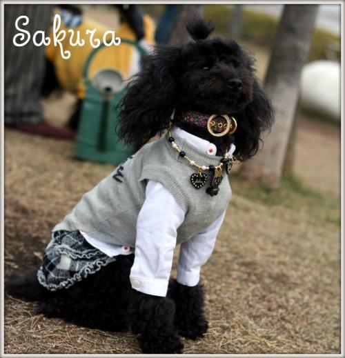 sakuraちゃん