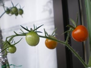 2010家庭菜園☆まとめ 1