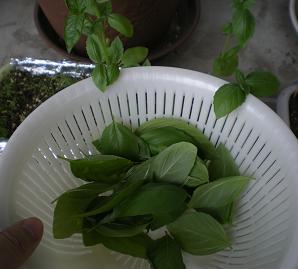 2010家庭菜園☆まとめ 4