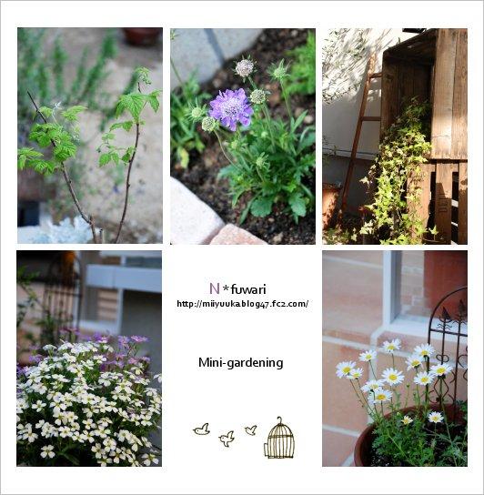 お外の植物たち♪