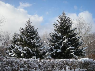 12月19日の景色_convert_20091219154059