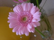 お花4_convert_20100131180843