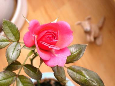 バラが咲いた♪_convert_20100410162840