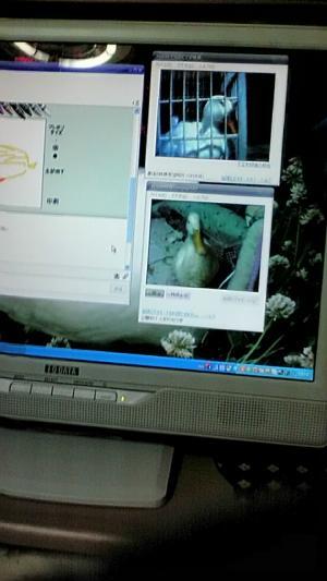 20100521191940_convert_20100521192355.jpg