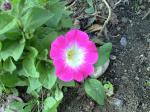 町で見かけた花シリーズhana09308