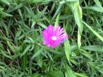 町で見かけた花シリーズhana09334