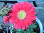 町で見かけた花シリーズhana09337