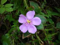 201106沖縄 045