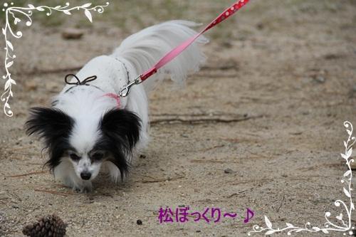 奈良公園3032313
