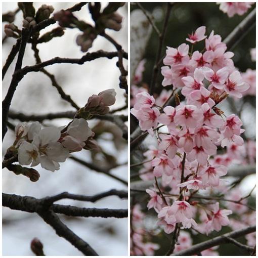 奈良公園3032312