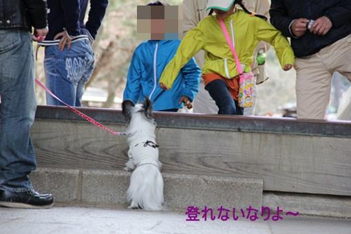 奈良公園3032310
