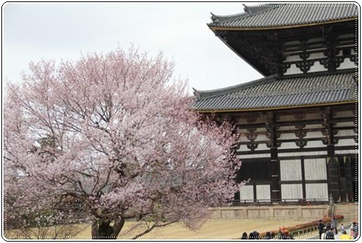 奈良公園303236