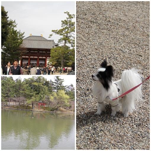 奈良公園303234