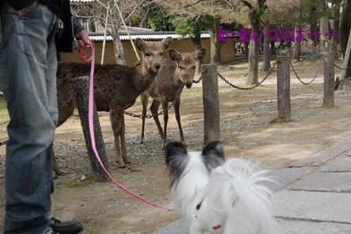 奈良公園303233