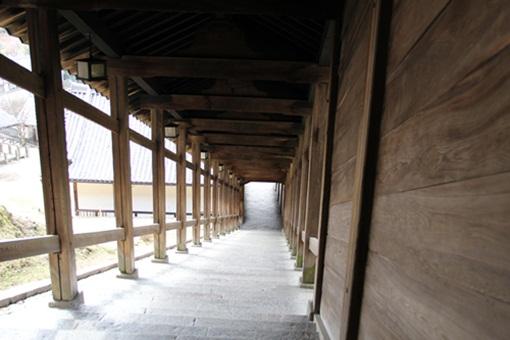 奈良公園3032411