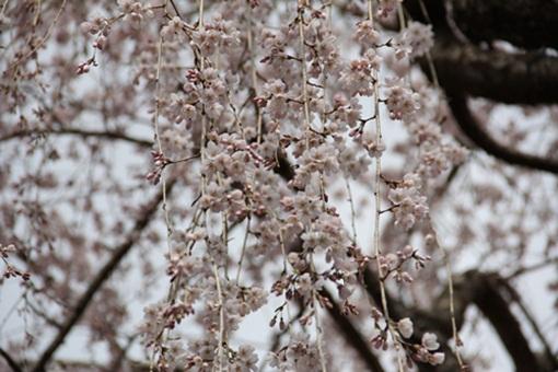 奈良公園303246