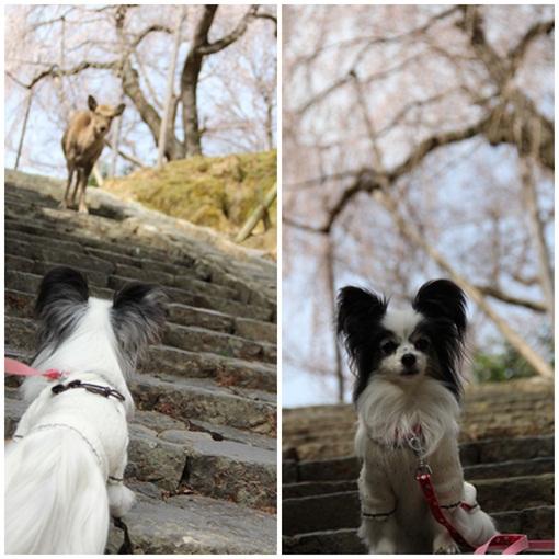 奈良公園303245