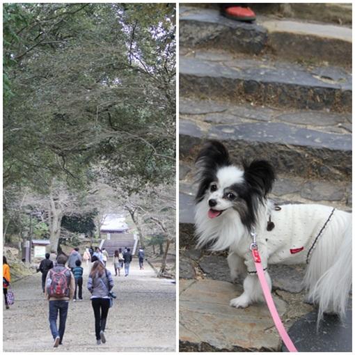 奈良公園303241