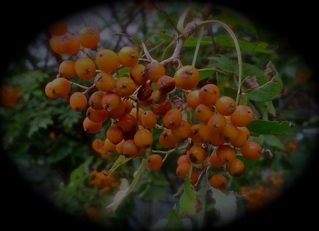 2011:10:11木の実