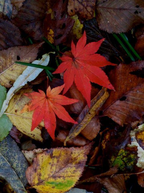 2011:10:23美し枯れ葉