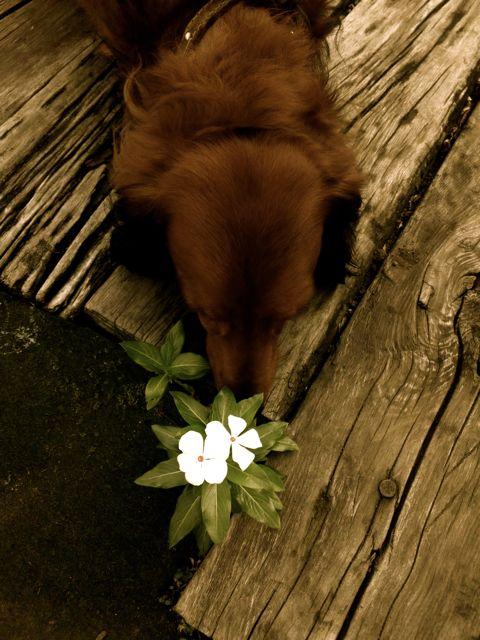 20111101ビスケと花