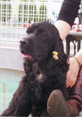 保護犬IMG_0004