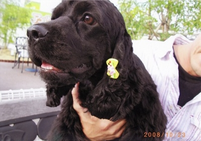 保護犬IMG_0001