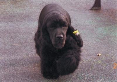 保護犬IMG_0003
