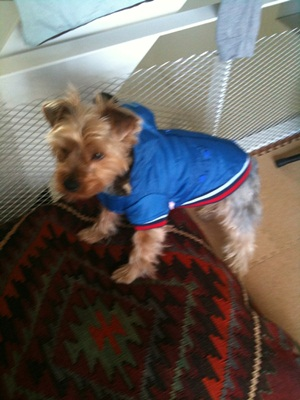 保護犬IMG_0180