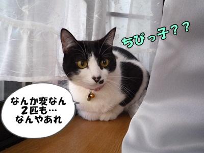 にゃんこP1150501