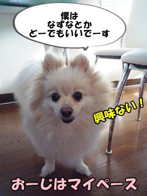 おーちゃんP1160306