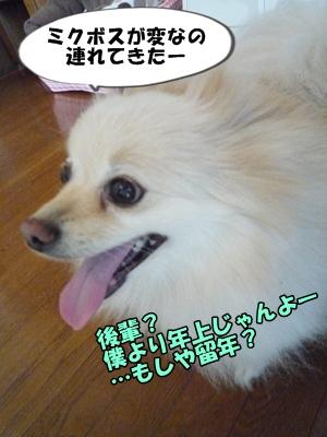 おーちゃんP1160293