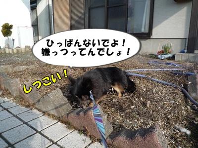 散歩拒否P1160049