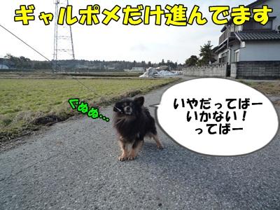 散歩拒否P1160063