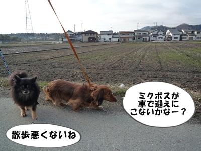 ギャル散歩P1160073