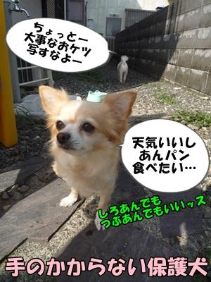 ちくわP1160679