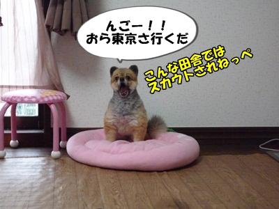 たぬきちP1150984
