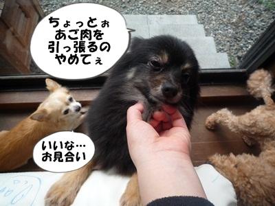 くまP1160619